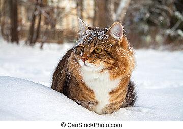 se sienta, nieve, gato