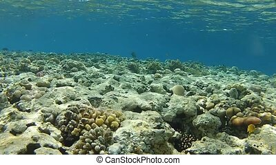 Sea and corals