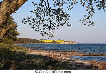 Sea and yellow rape field