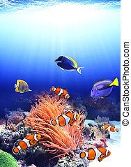 Sea anemone and clown fish in ocean