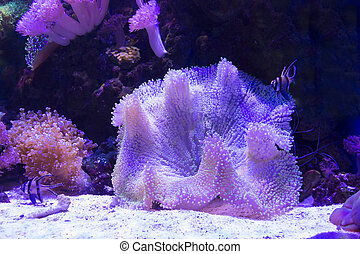sea anemone and coral on sand over deep blue background.