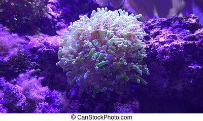 Sea Anemone and Sea Life