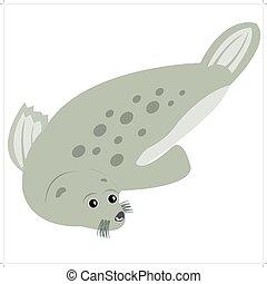 Sea animal seal