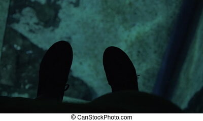 View to the feet on glass floor of oceanarium and swimming sea animal underneath