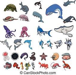 Sea animal underwater