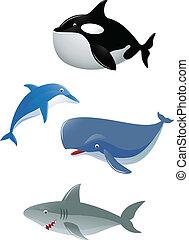 Vector illustration of sea animal
