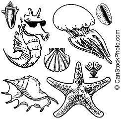 Sea animals and shells collection.