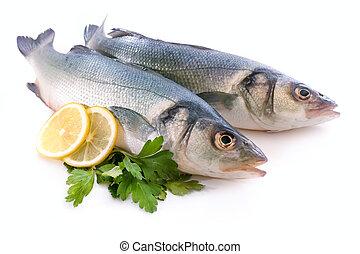 Sea-bass, Dicentrarchus labrax