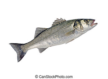 Sea Bass Fish (Dicentrarchus labrax) Isolated on White...