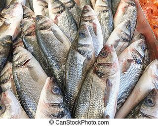 Sea bass fish on ice