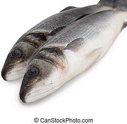 Sea bass - Fresh fish is sea bass on a white background, ...