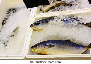 Sea bass frozen in the ice on the supermarket shelf. - Sea...