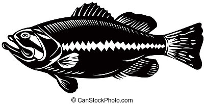 Sea Bass - Illustration of a sea bass