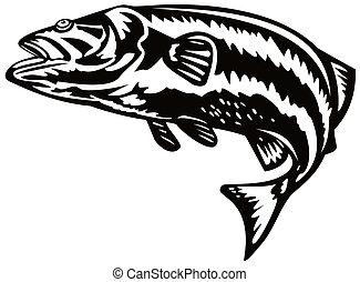 Sea bass jumping - Illustration on bass fish