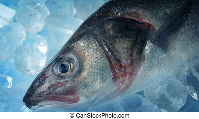 Sea Bass On Ice - Chilled air moves across sea bass on ice