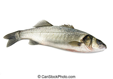 sea bass on the white background