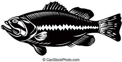 Sea Bass - Illustration of a sea bass