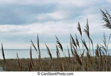 sea, beach, sea, sand, dunes, grass, Baltic sea