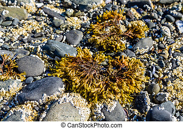 Sea Bed at Low Tide