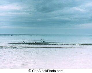 Sea bird hunting on beach. Offshore with bird, beach sea