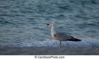 Sea bird nature ocean - Very close to camera in bird sea