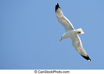 Sea Bird on Blue Sky