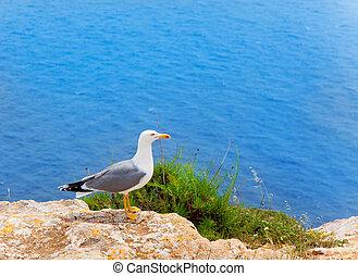 sea bird on mediterranean sea in Balearic islands