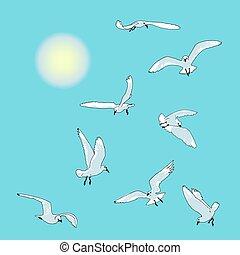Sea birds, gulls in flight