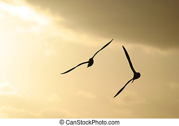 Sea Birds - Sea birds silhouetted against a stormy sunset