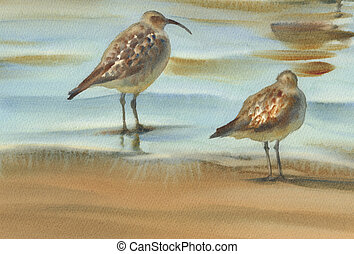 sea birds watercolor background - seagulls and sandpipers by...