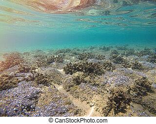 sea bottom in Greece - photo of the beautiful sea bottom in...