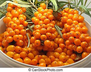 Sea-buckthorn berries - Heap mature orange sea-buckthorn ...