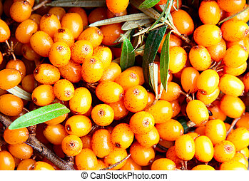 Sea-buckthorn close-up, may be used as background