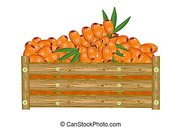 Sea buckthorn in box isolated on white background. Crate of ...