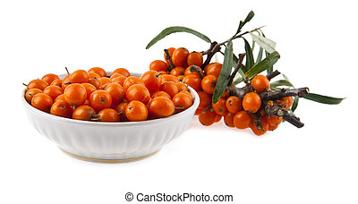 sea-buckthorn on a white background