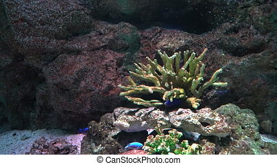 Sea corals on the seabed and floating near colorful tropical fish