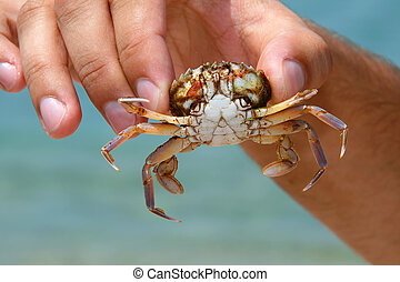 Sea crab in hand