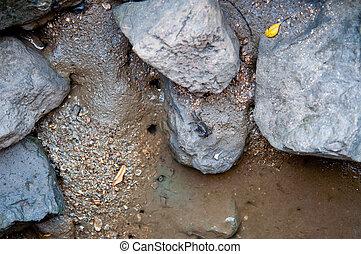 Sea crabon the rock