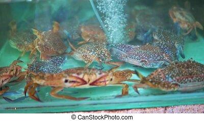 Sea crabs in the aquarium at seafood market, close-up