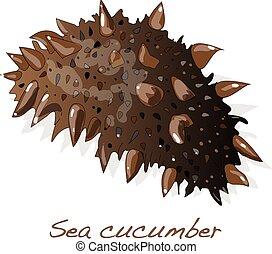 sea cucumber clipart