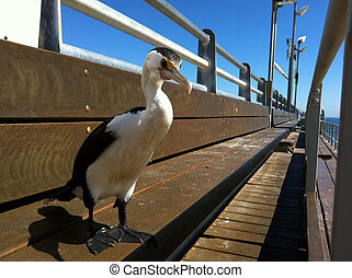 Sea dabbling duck stands on a bridge on summer day