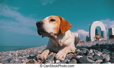 sea., dog., sauvage, mensonges, sdf, pierre, chien, rivage, ...