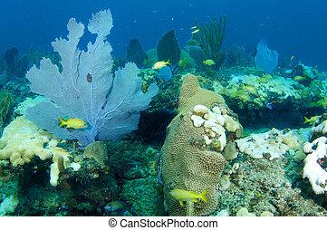 Sea Fan on a coral reef.