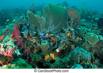 Sea Fan on a reef in south east Florida