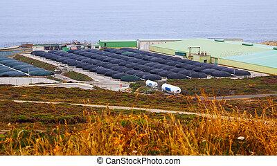 Sea farm
