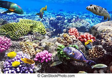 sea., fish, αίγυπτος , αριστερός κοραλλένιο χρώμα