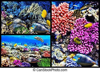 sea., fish, collage., egypt., 赤い珊瑚