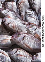 Sea fish exposed on the shelves at the market