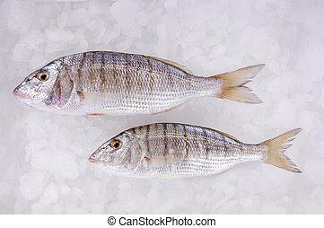 Sea Fish - fresh fish placed on ice