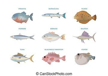 Sea fish set.